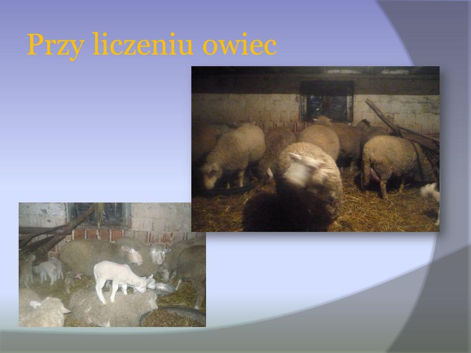 Przy liczeniu owiec