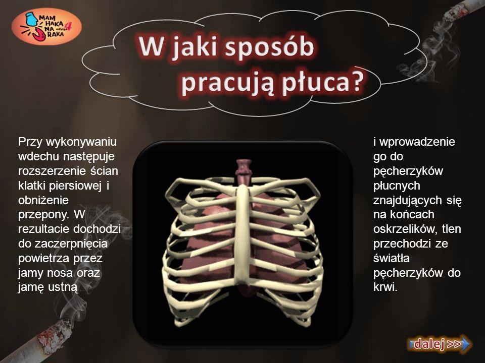 W jaki sposób pracują płuca dalej >>