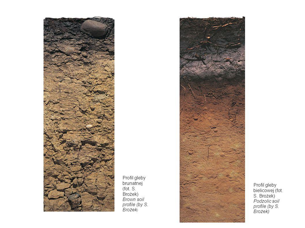 Profil gleby brunatnej (fot. S. Brożek)