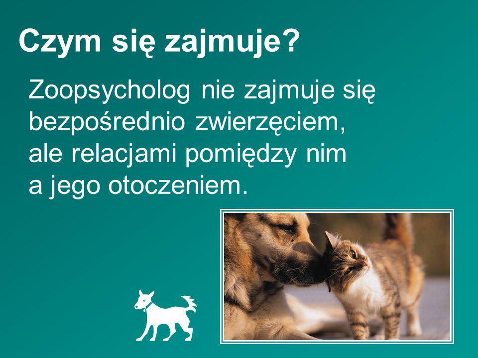Czym się zajmuje Zoopsycholog nie zajmuje się bezpośrednio zwierzęciem, ale relacjami pomiędzy nim a jego otoczeniem.