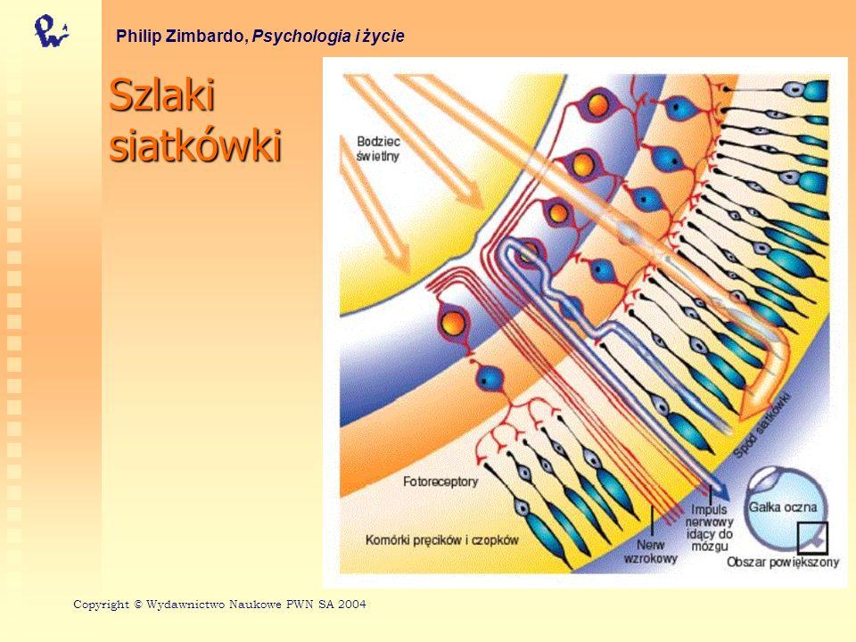 Szlaki siatkówki Philip Zimbardo, Psychologia i życie
