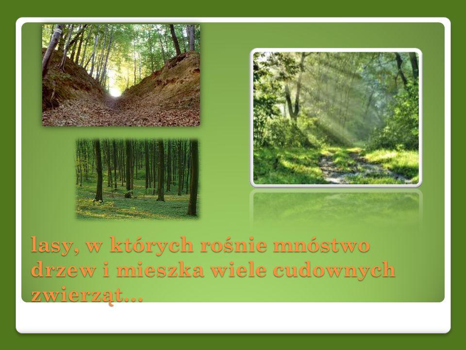 lasy, w których rośnie mnóstwo drzew i mieszka wiele cudownych zwierząt…