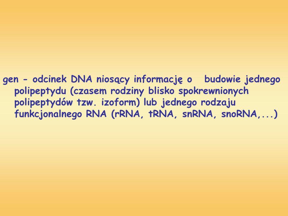 gen - odcinek DNA niosący informację o. budowie jednego