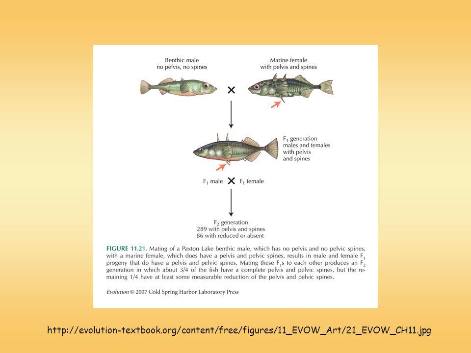 http://evolution-textbook.org/content/free/figures/11_EVOW_Art/21_EVOW_CH11.jpg