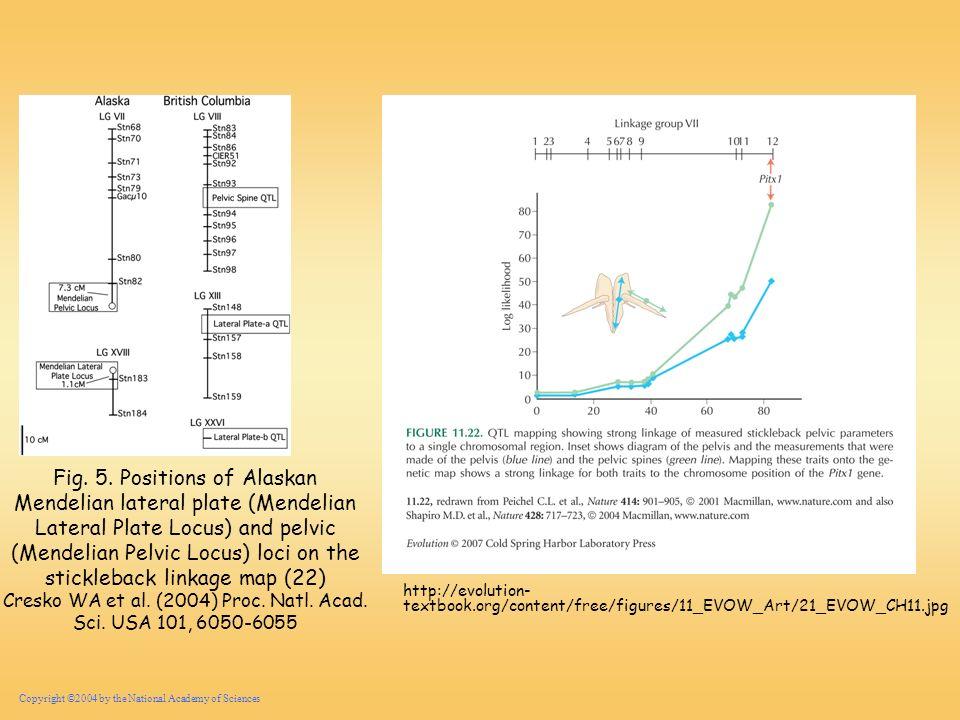 Cresko WA et al. (2004) Proc. Natl. Acad. Sci. USA 101, 6050-6055