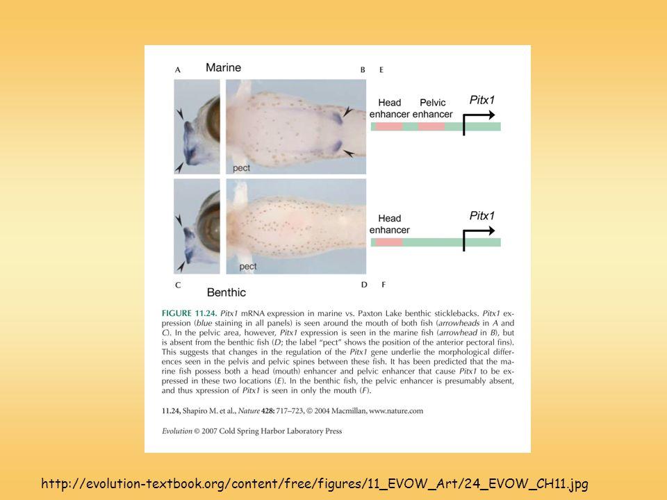 http://evolution-textbook.org/content/free/figures/11_EVOW_Art/24_EVOW_CH11.jpg
