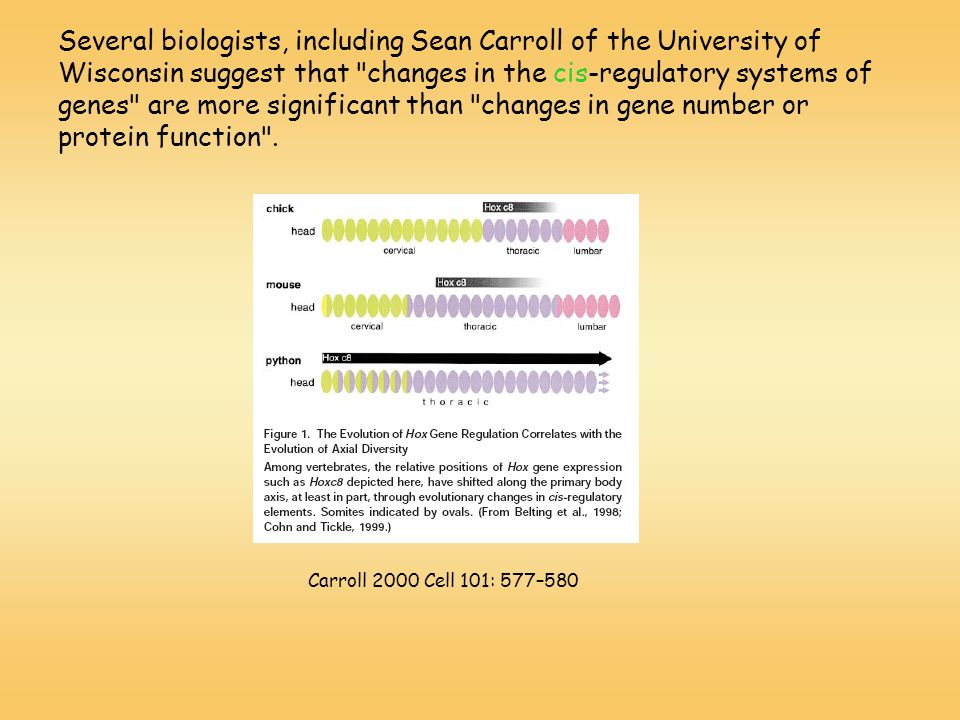 Several biologists, including Sean Carroll of the University of Wisconsin suggest that changes in the cis-regulatory systems of genes are more significant than changes in gene number or protein function .