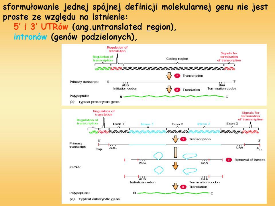 sformułowanie jednej spójnej definicji molekularnej genu nie jest proste ze względu na istnienie: 5' i 3' UTRów (ang.untranslated region), intronów (genów podzielonych),