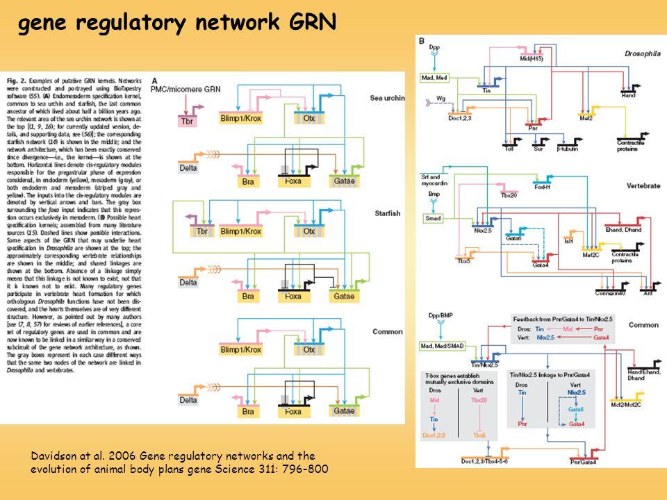 gene regulatory network GRN
