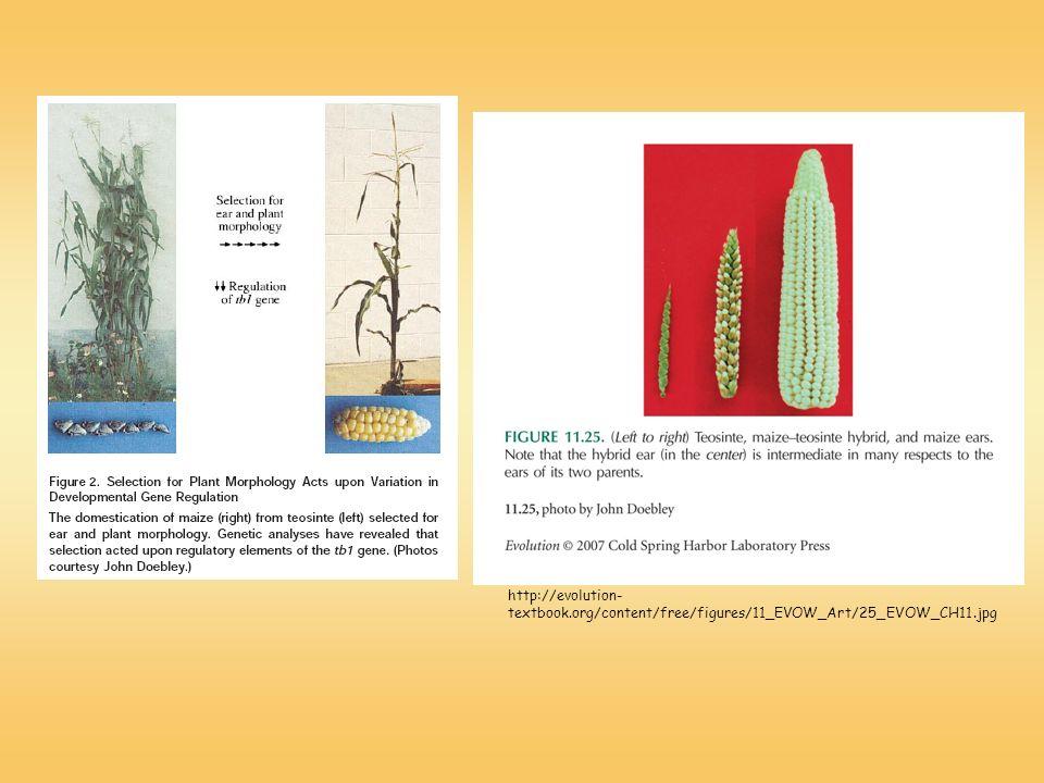http://evolution-textbook.org/content/free/figures/11_EVOW_Art/25_EVOW_CH11.jpg