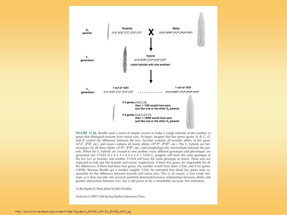 http://evolution-textbook.org/content/free/figures/11_EVOW_Art/26_EVOW_CH11.jpg