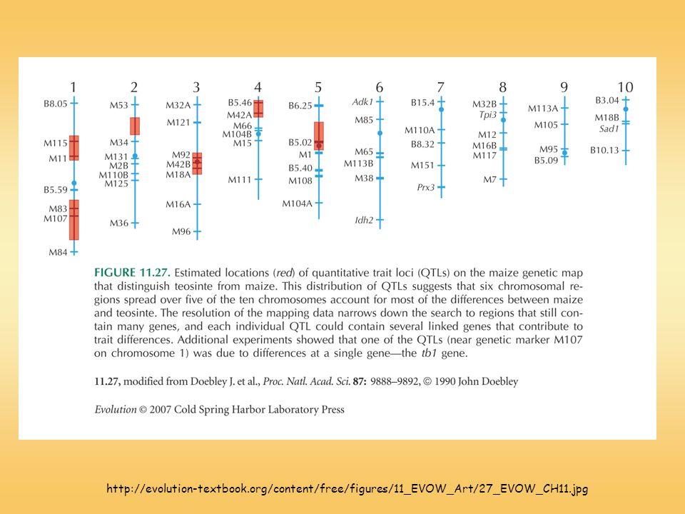 http://evolution-textbook.org/content/free/figures/11_EVOW_Art/27_EVOW_CH11.jpg