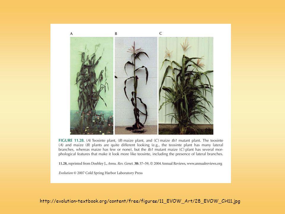 http://evolution-textbook.org/content/free/figures/11_EVOW_Art/28_EVOW_CH11.jpg