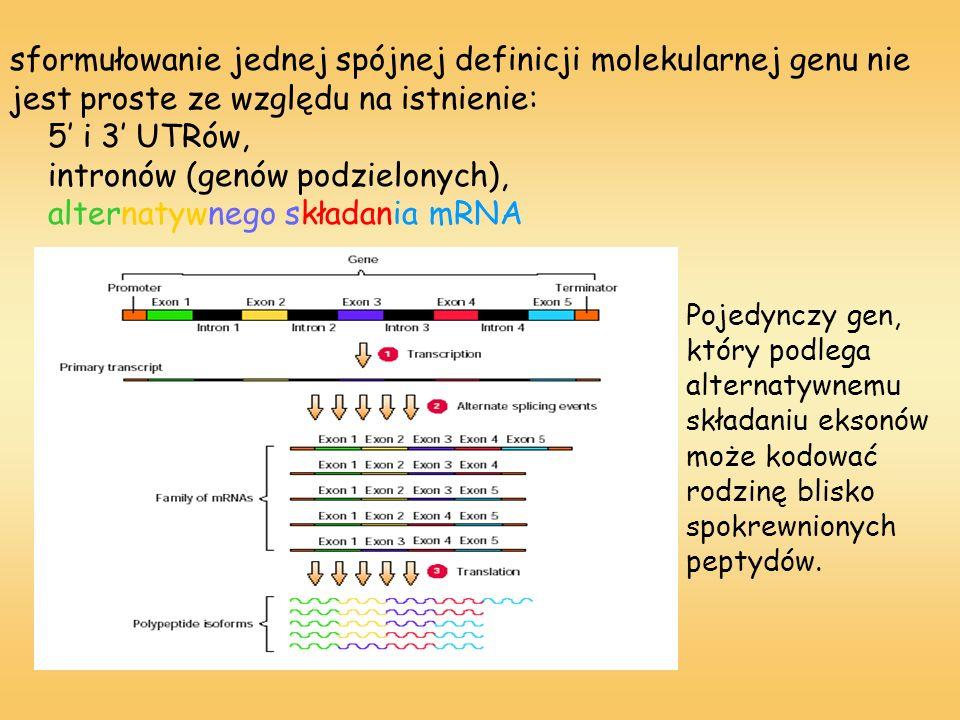 sformułowanie jednej spójnej definicji molekularnej genu nie jest proste ze względu na istnienie: 5' i 3' UTRów, intronów (genów podzielonych), alternatywnego składania mRNA