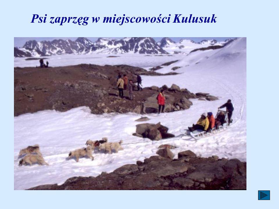 Psi zaprzęg w miejscowości Kulusuk