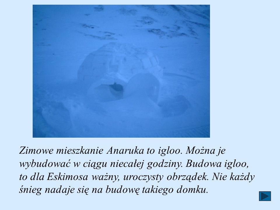 Zimowe mieszkanie Anaruka to igloo