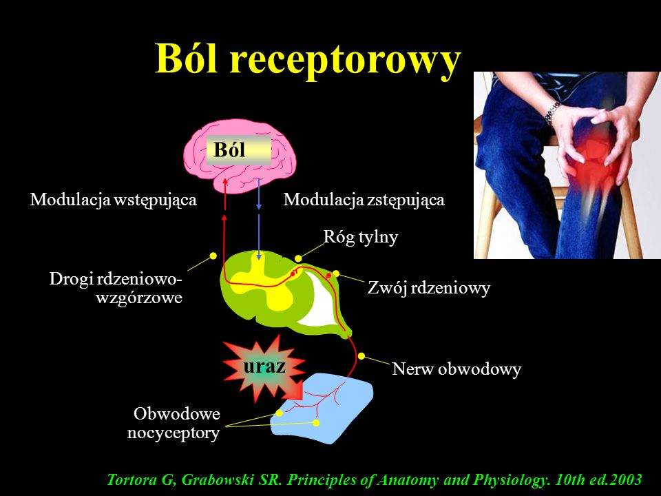 Ból receptorowy Ból uraz Modulacja wstępująca Modulacja zstępująca