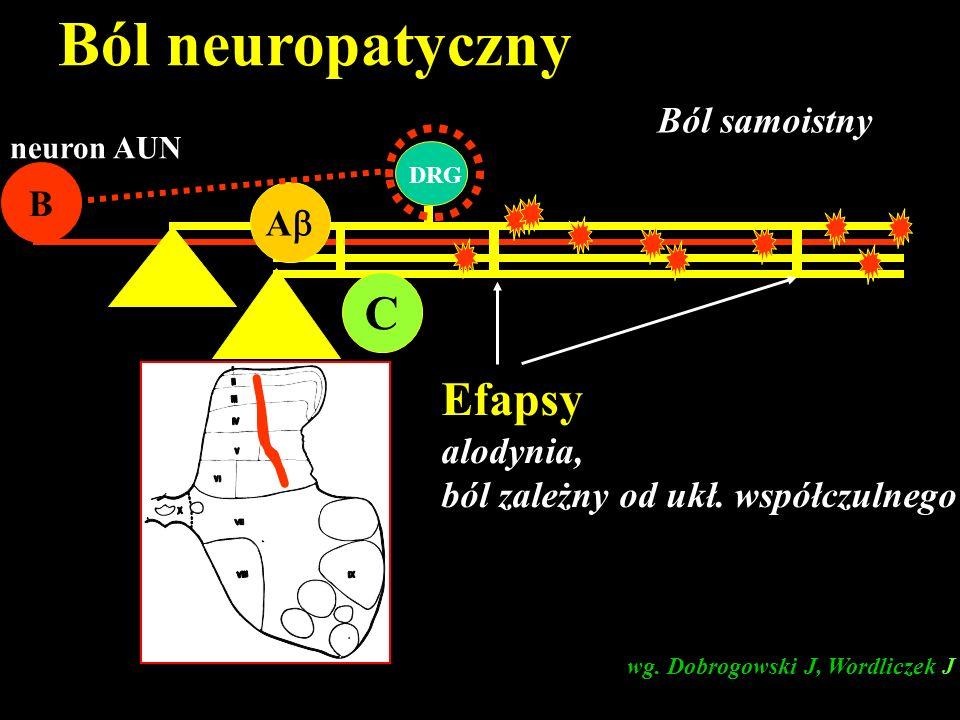 Ból neuropatyczny C Efapsy Ból samoistny B A alodynia,