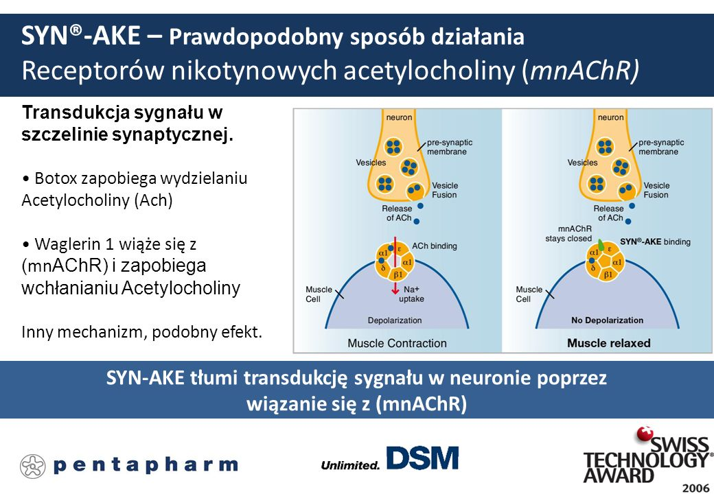 SYN-AKE tłumi transdukcję sygnału w neuronie poprzez