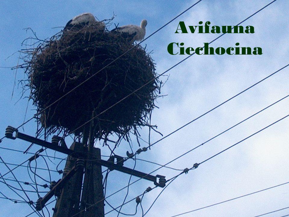 Dzięki tym ptakom w naszej wsi jest coraz więcej mieszkańców…