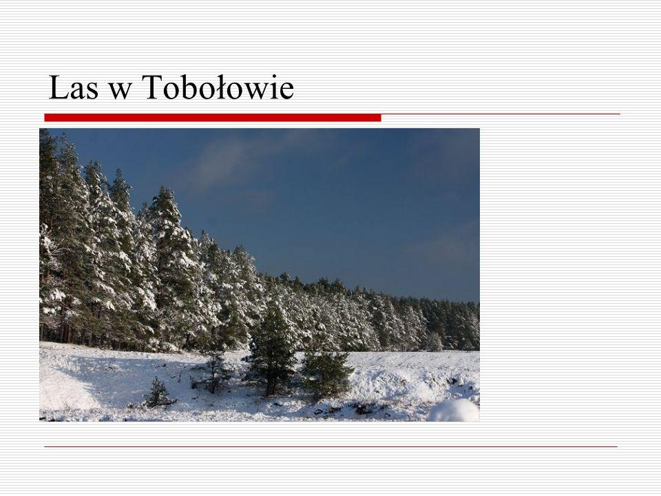Las w Tobołowie