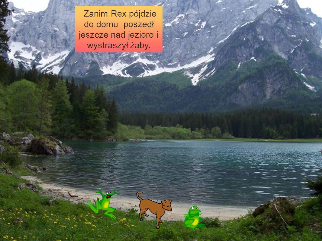 Zanim Rex pójdzie do domu poszedł jeszcze nad jezioro i wystraszył żaby.