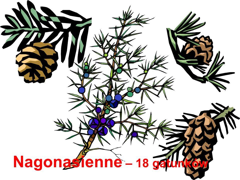 Nagonasienne – 18 gatunków