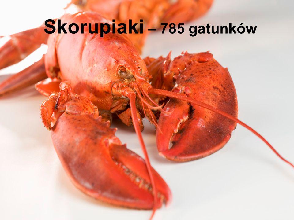 Skorupiaki – 785 gatunków