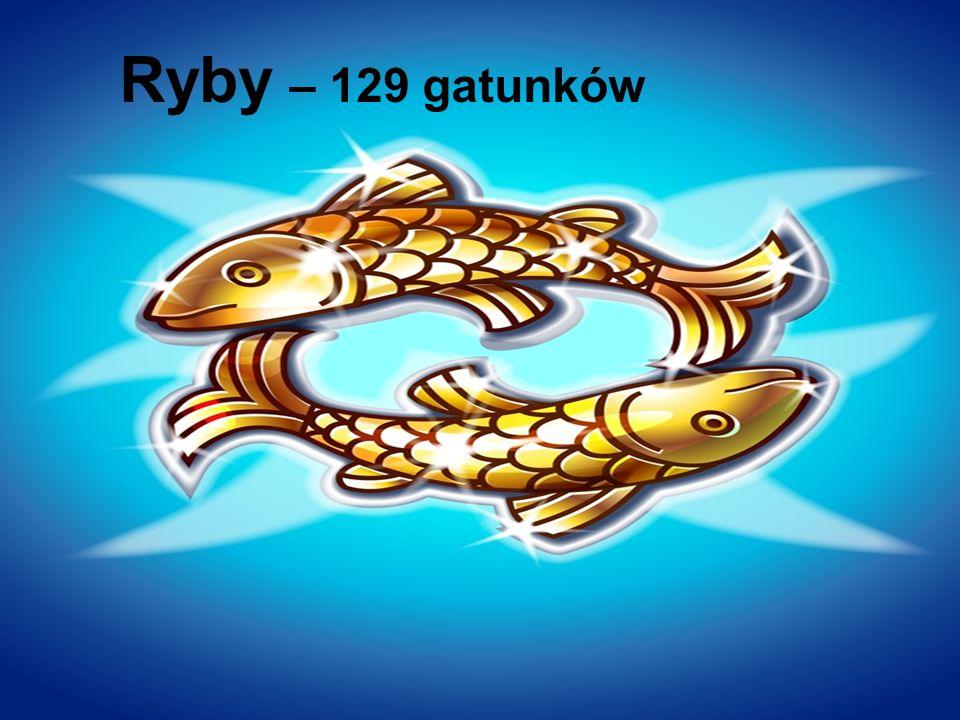 Ryby – 129 gatunków