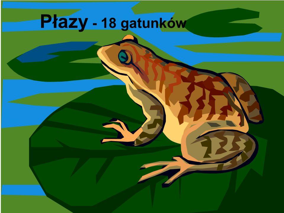 Płazy - 18 gatunków