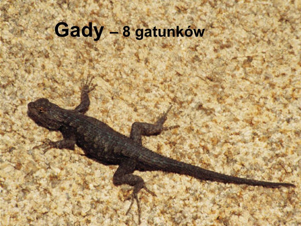 Gady – 8 gatunków