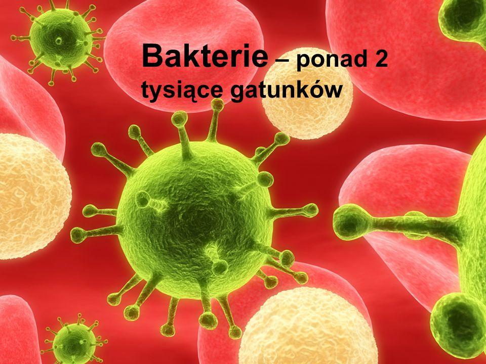 Bakterie – ponad 2 tysiące gatunków