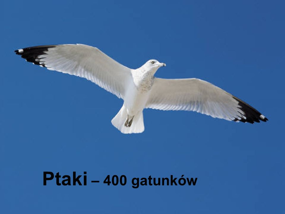 Ptaki – 400 gatunków