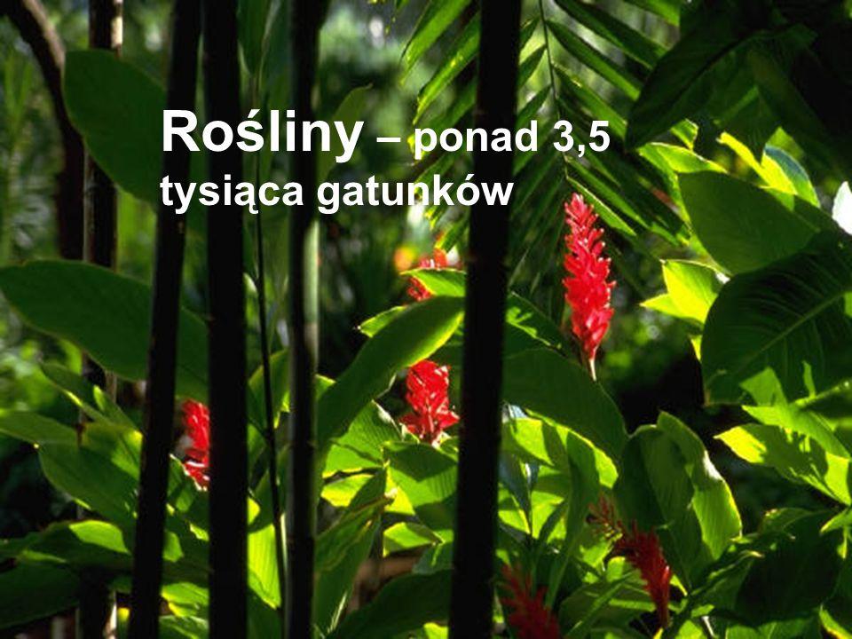 Rośliny – ponad 3,5 tysiąca gatunków