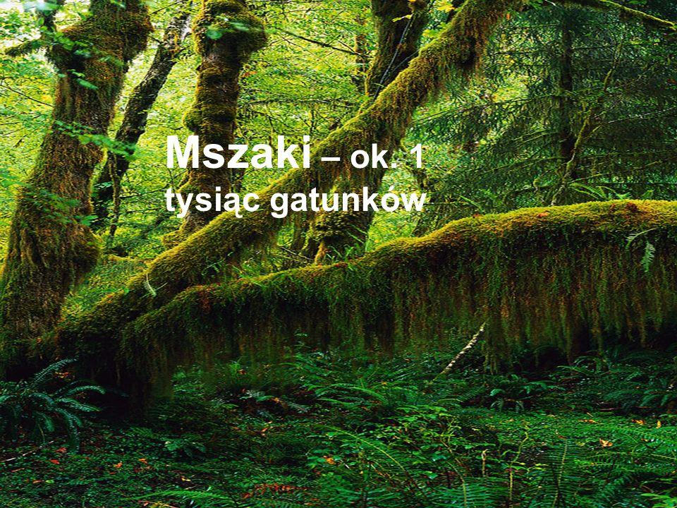 Mszaki – ok. 1 tysiąc gatunków
