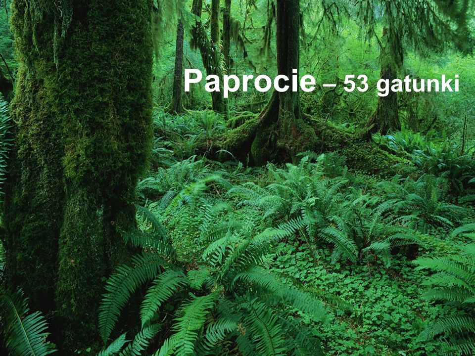 Paprocie – 53 gatunki