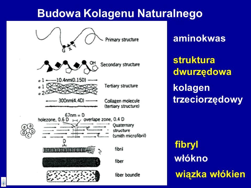 Budowa Kolagenu Naturalnego