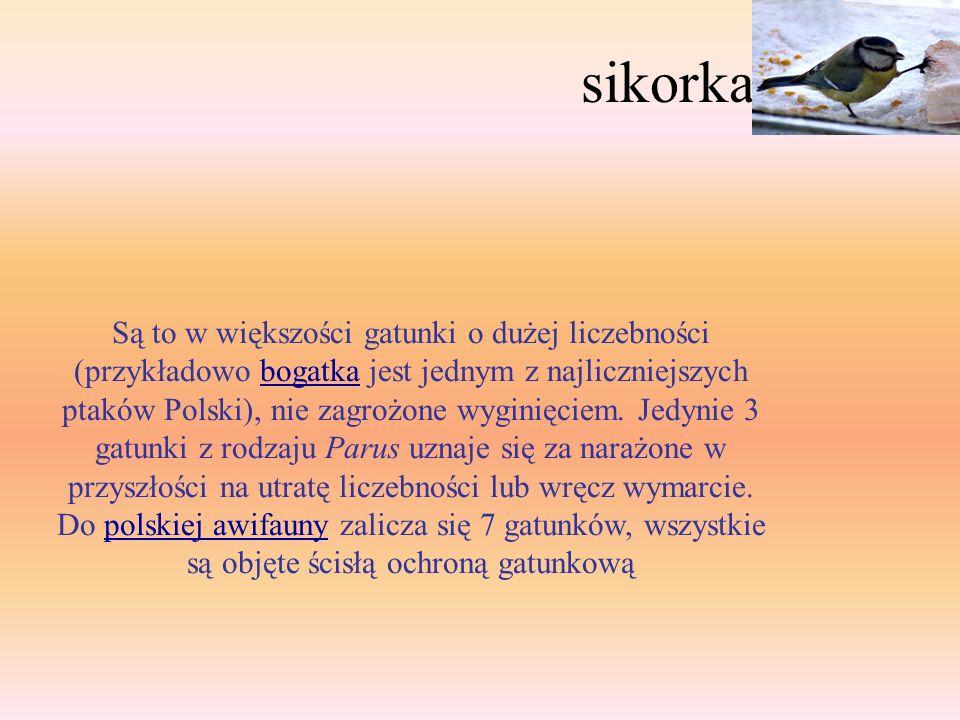 sikorka