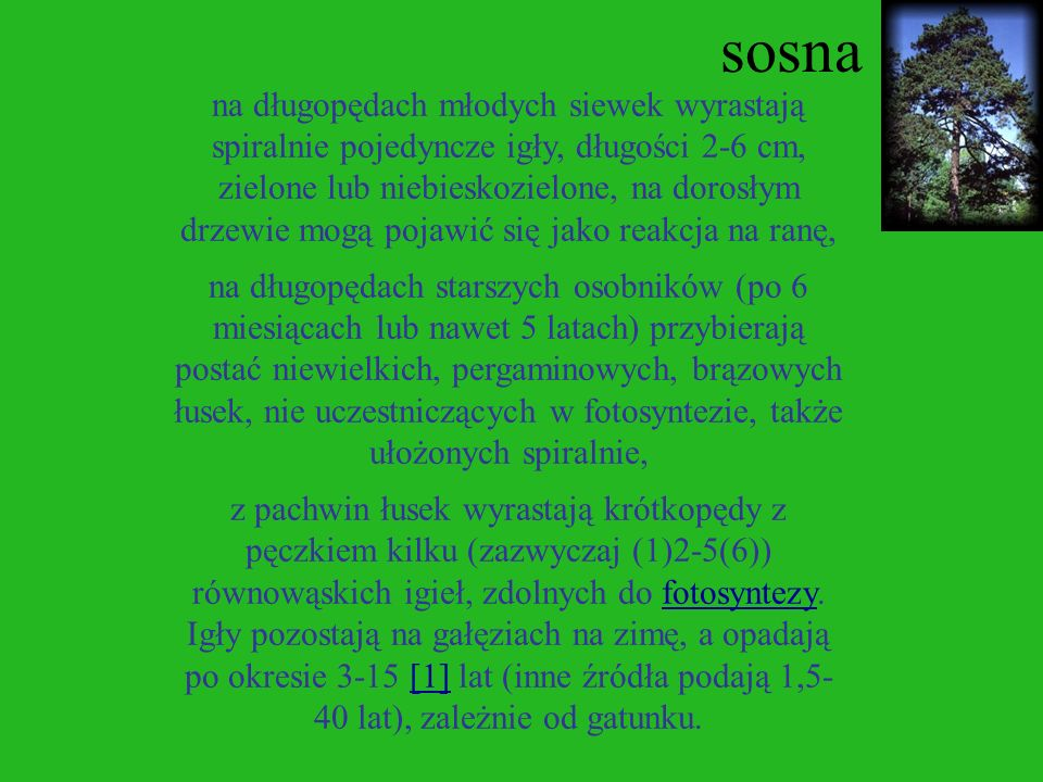 sosna