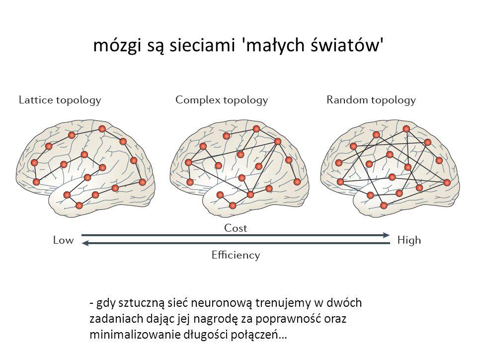 mózgi są sieciami małych światów