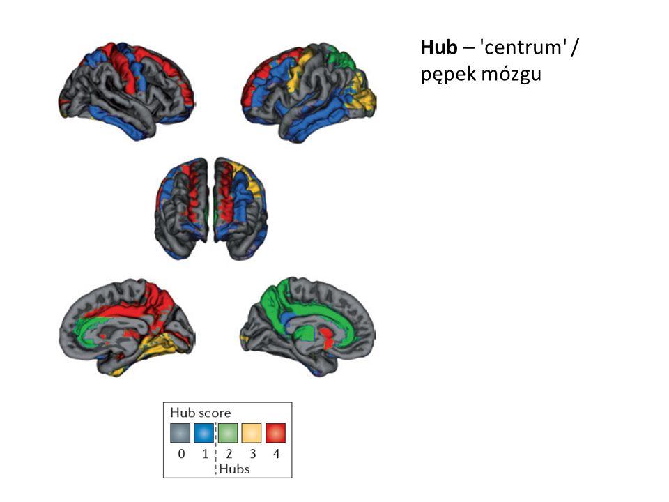 Hub – centrum / pępek mózgu