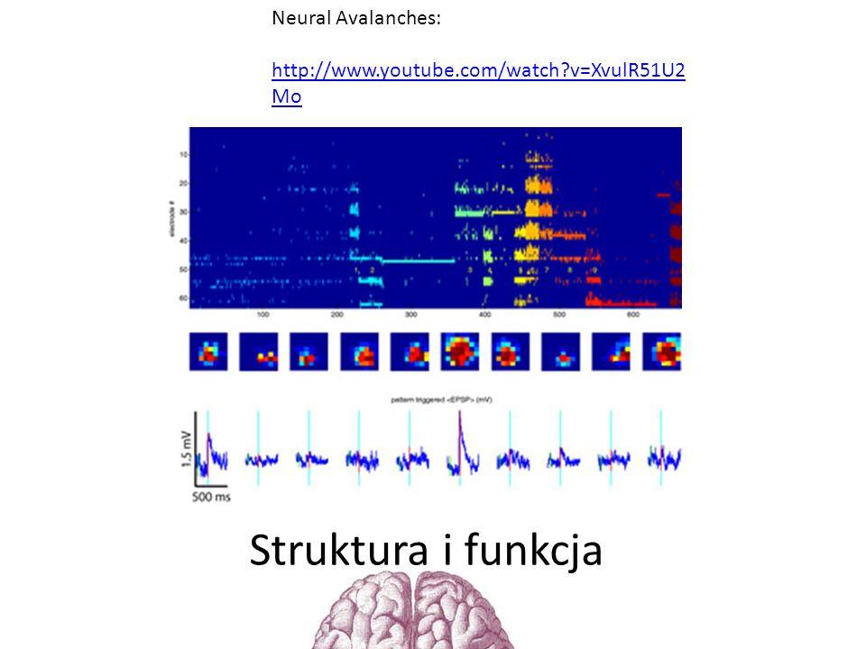 Struktura i funkcja Neural Avalanches:
