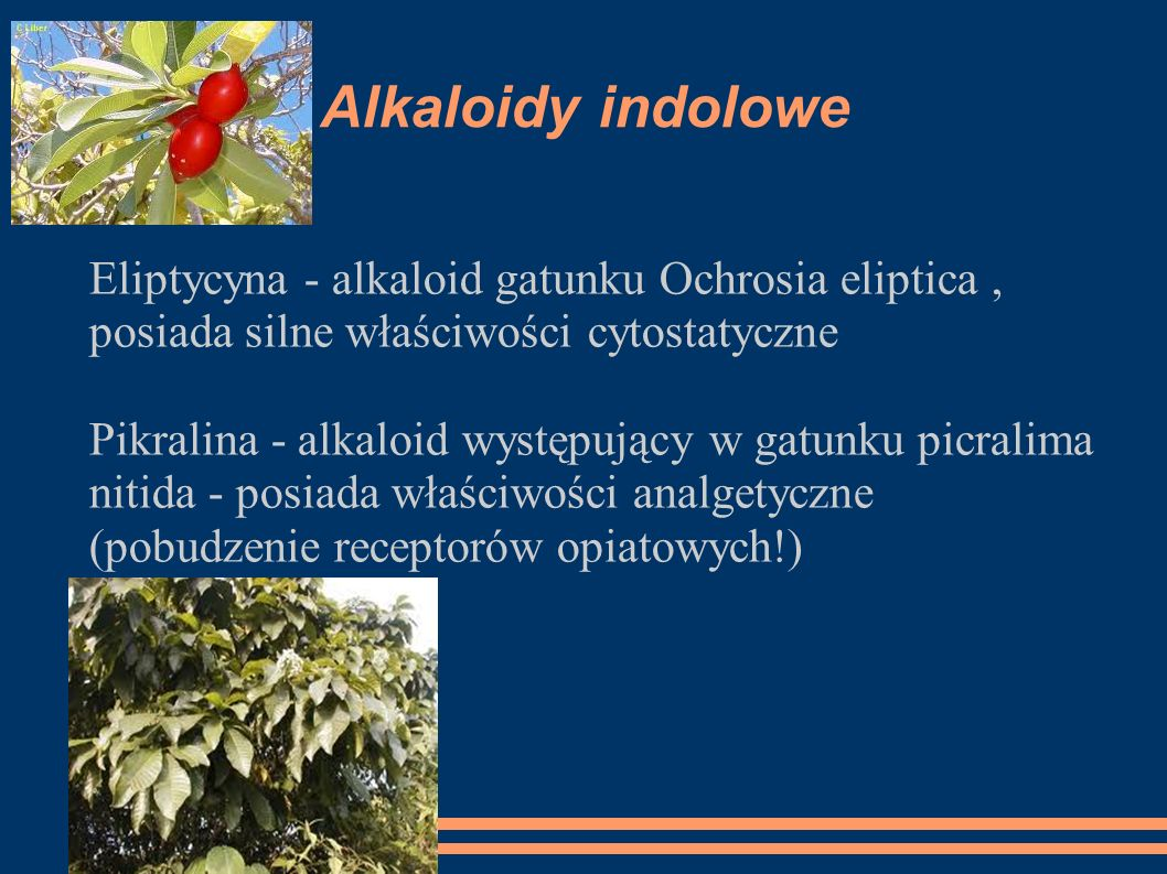 Alkaloidy indoloweEliptycyna - alkaloid gatunku Ochrosia eliptica , posiada silne właściwości cytostatyczne.