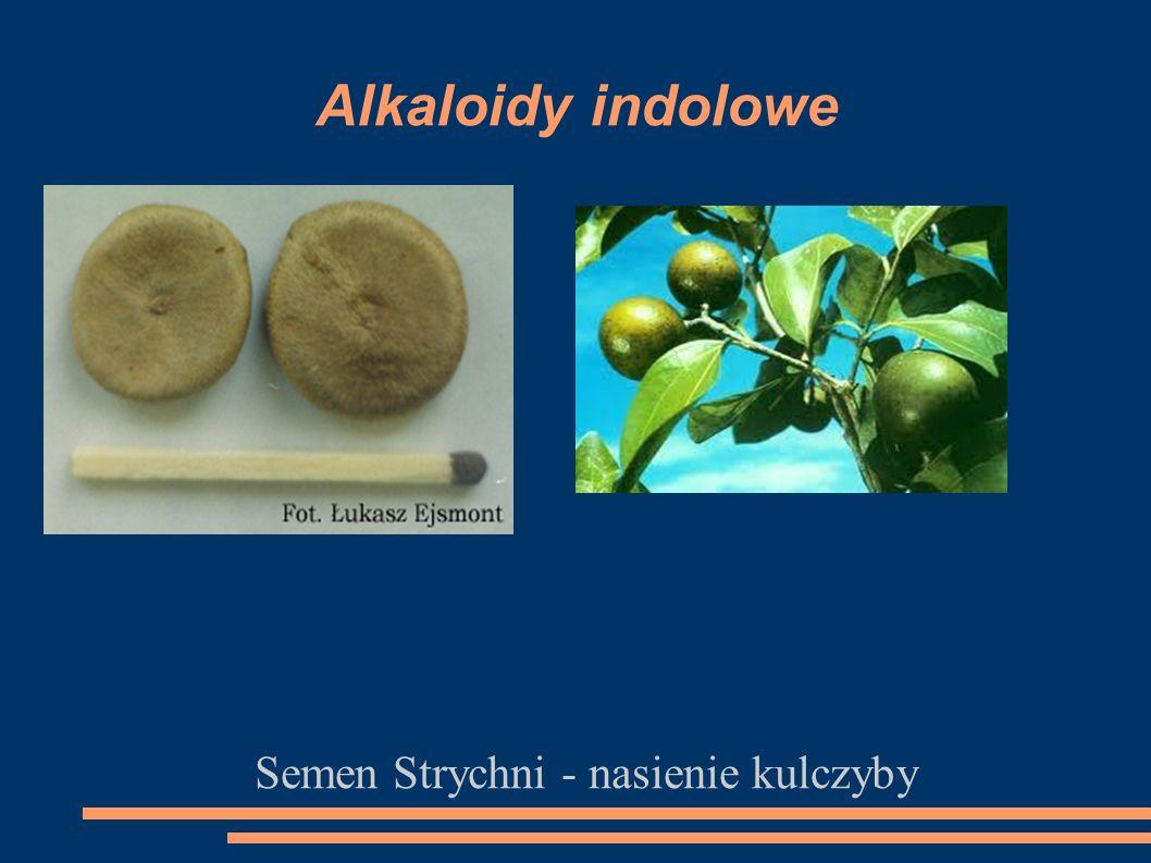 Semen Strychni - nasienie kulczyby