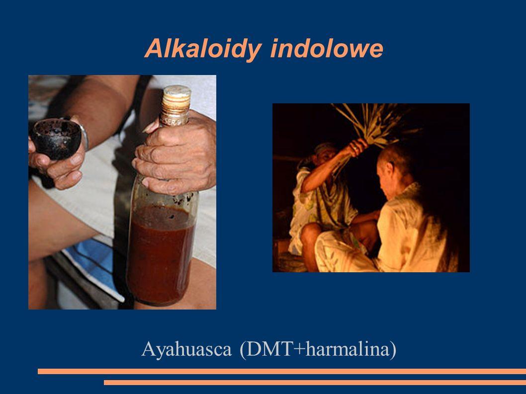 Ayahuasca (DMT+harmalina)