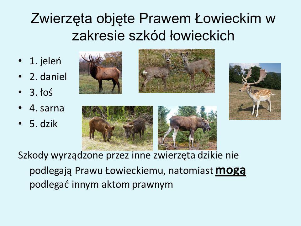 Zwierzęta objęte Prawem Łowieckim w zakresie szkód łowieckich