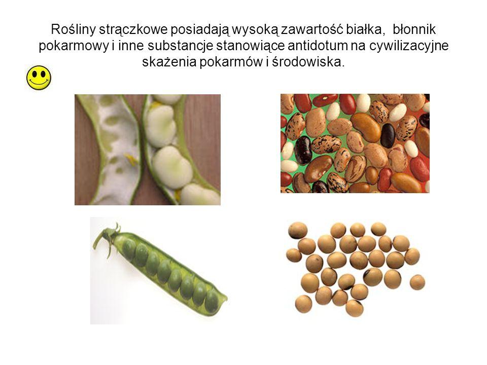 Rośliny strączkowe posiadają wysoką zawartość białka, błonnik pokarmowy i inne substancje stanowiące antidotum na cywilizacyjne skażenia pokarmów i środowiska.