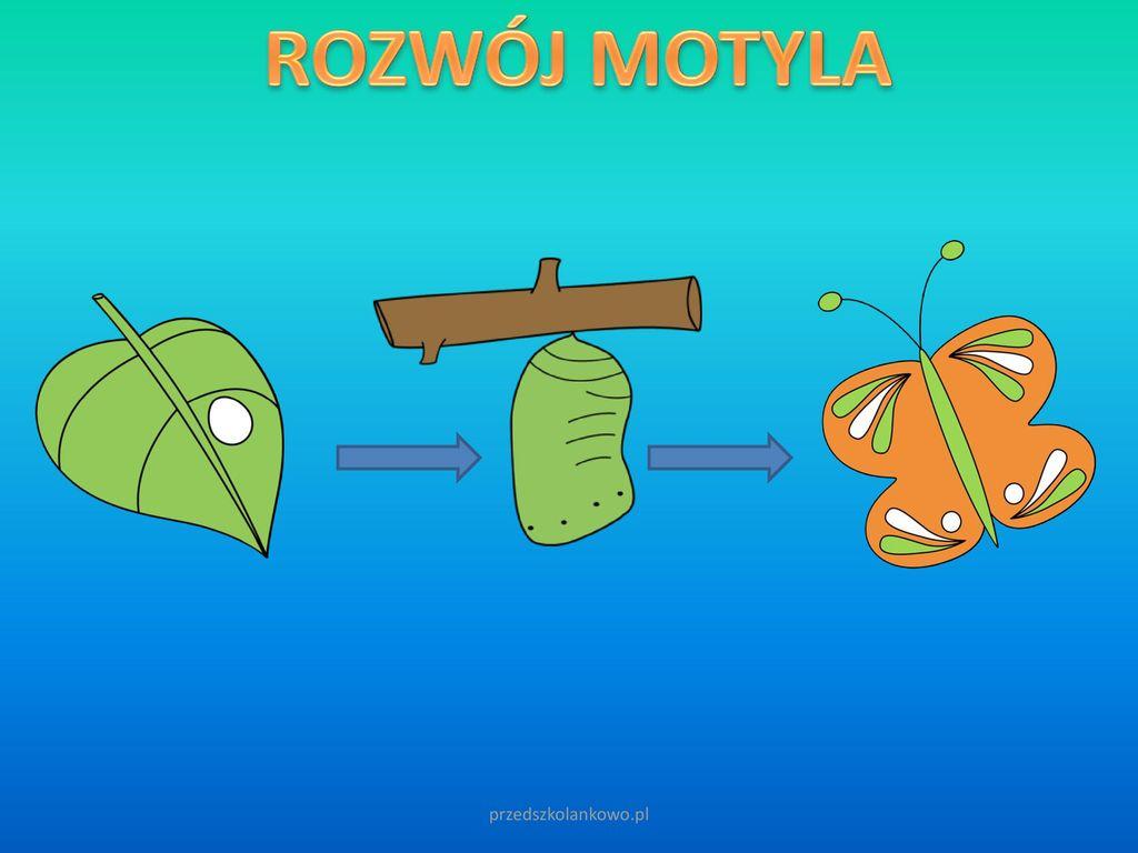 ROZWÓJ MOTYLA przedszkolankowo.pl
