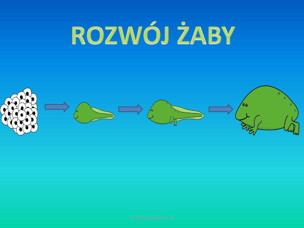 ROZWÓJ ŻABY przedszkolankowo.pl