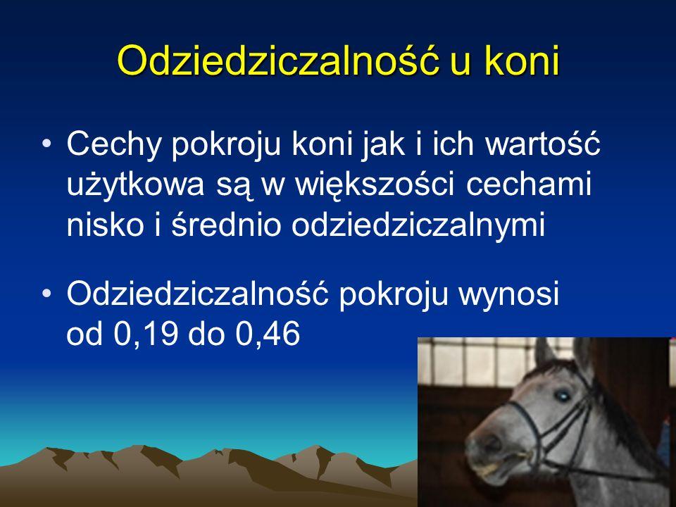 Odziedziczalność u koni